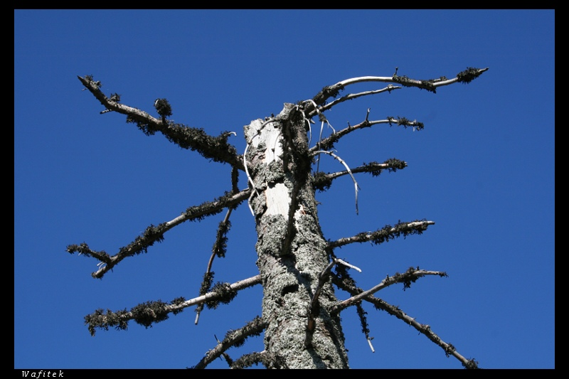 Tree and lichens